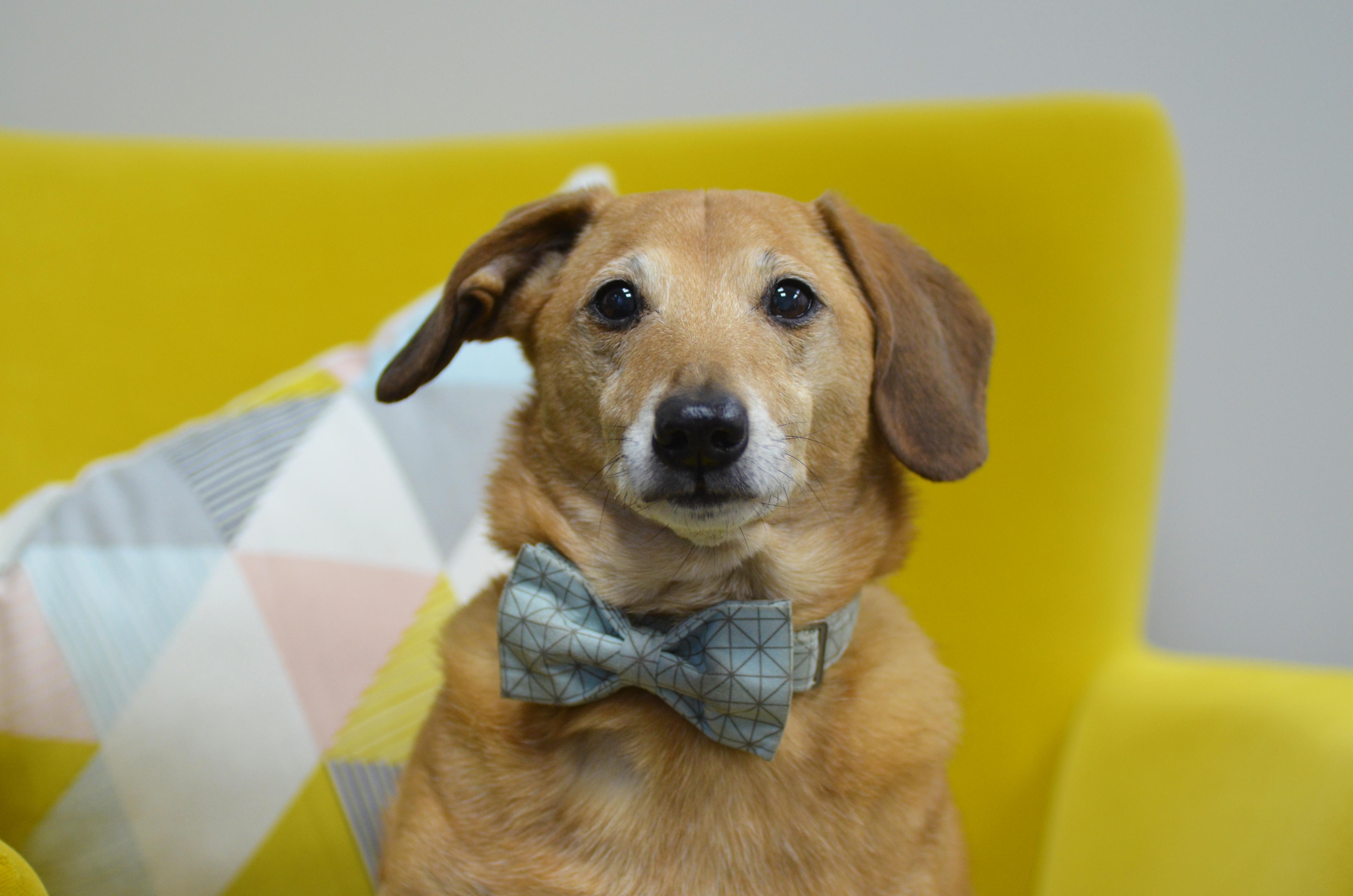 Meet the Team - Louie, The Dog